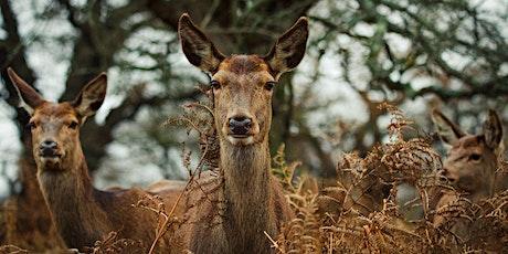 Wildlife Photography Workshops in Richmond Park, London tickets