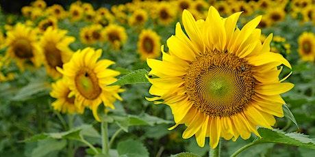 Flowers with Flash with Bobbi Lane & Profoto - Live Online billets