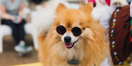 Woofstock 2021: An All-Day Celebration of Pups, Music, and More at MUTTS Ca tickets
