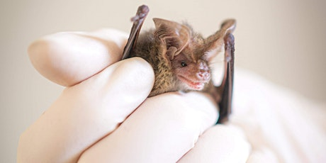 Basic First Aid on Australias Smallest: the Microbat tickets