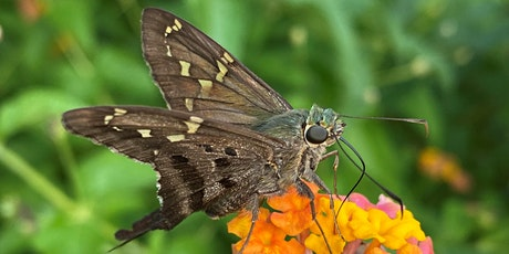 A Homeowner's Guide to Pollinator Friendly Mosquito Management tickets