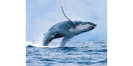 Whale Watching Walks tickets