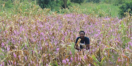 The role of African scientists in feeding the continent tickets