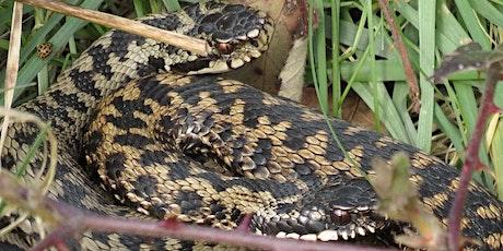 Ecology Training UK: Free Reptile Ecology Course bilhetes