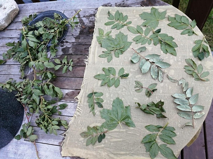 Natural Dyes and Eco-Printing with Jen Cake image
