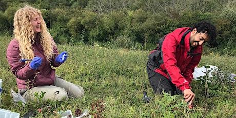 Brilliant Butterflies Grassland Heroes course 25th June tickets
