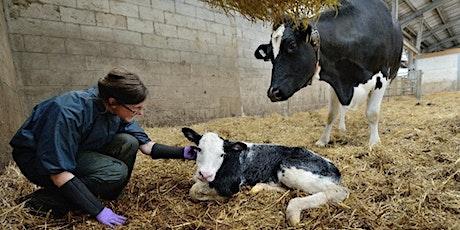 Intl. partnerships for stronger veterinary regulation (Julie Strous  AVBC) tickets