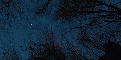 Sylvan Nights  - A Star Lit Walk with artist Steve Geliot tickets
