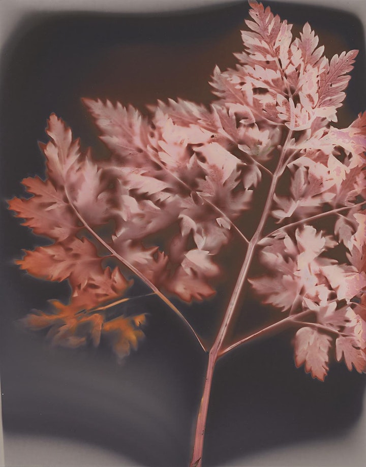 Two Tree Island Lumen Printing Workshop image