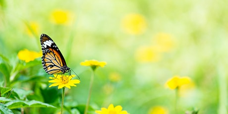 Exploring Our Backyard: Gardening for Pollinators tickets