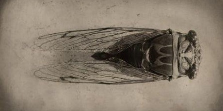 Drink and Draw with Tai - Cicada Drawing tickets