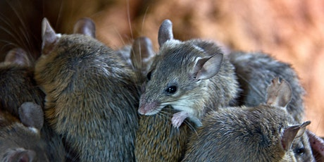 Mice Control workshop - Junee tickets