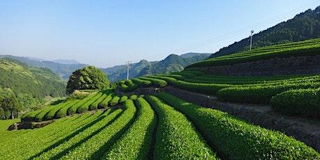 Green Tea Class and Tasting tickets