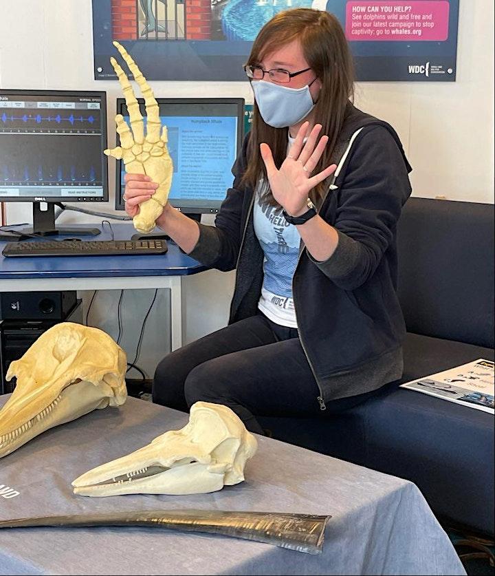 WDC Scottish Dolphin Centre - Private 'Explore the Bones Box' Activity image