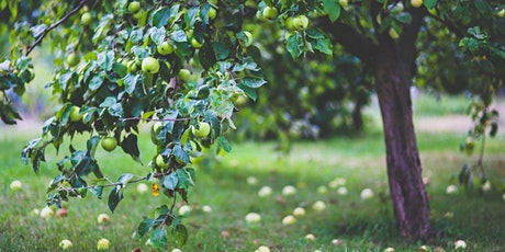 Leisure Learning: Pruning - What, When & How tickets