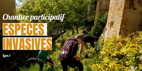 Chantier participatif : espèces invasives billets