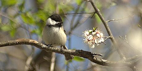 Bird-friendly Bird Walk tickets