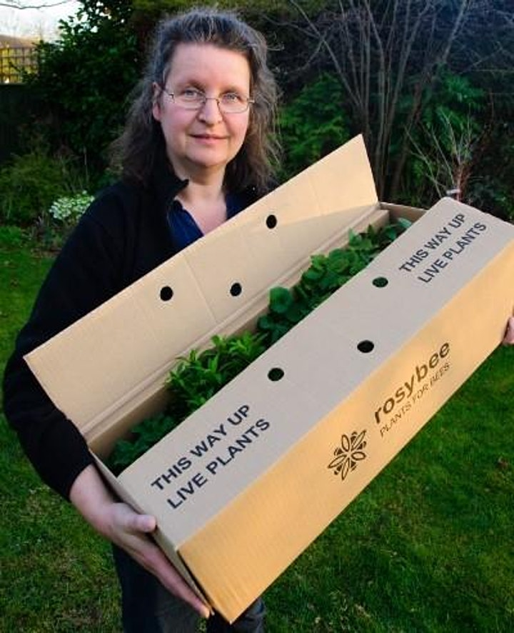 Planting for bees - a talk by Rosi Rollings image