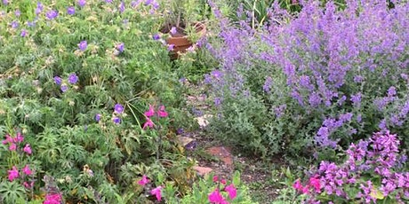 Planting for bees - a talk by Rosi Rollings tickets