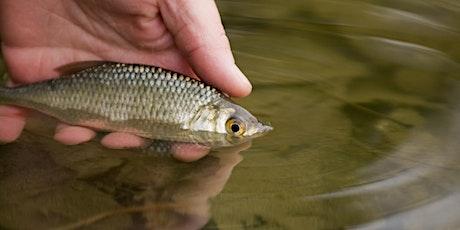 Balade carré de soie: Le Canal de Jonage et ses poissons billets
