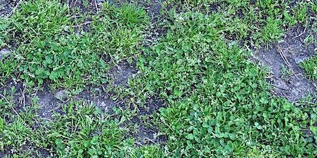 Managing Garden Weeds Part 2 tickets