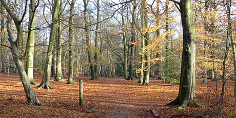 Tales of the Fanns: Thorndon Country Park tickets