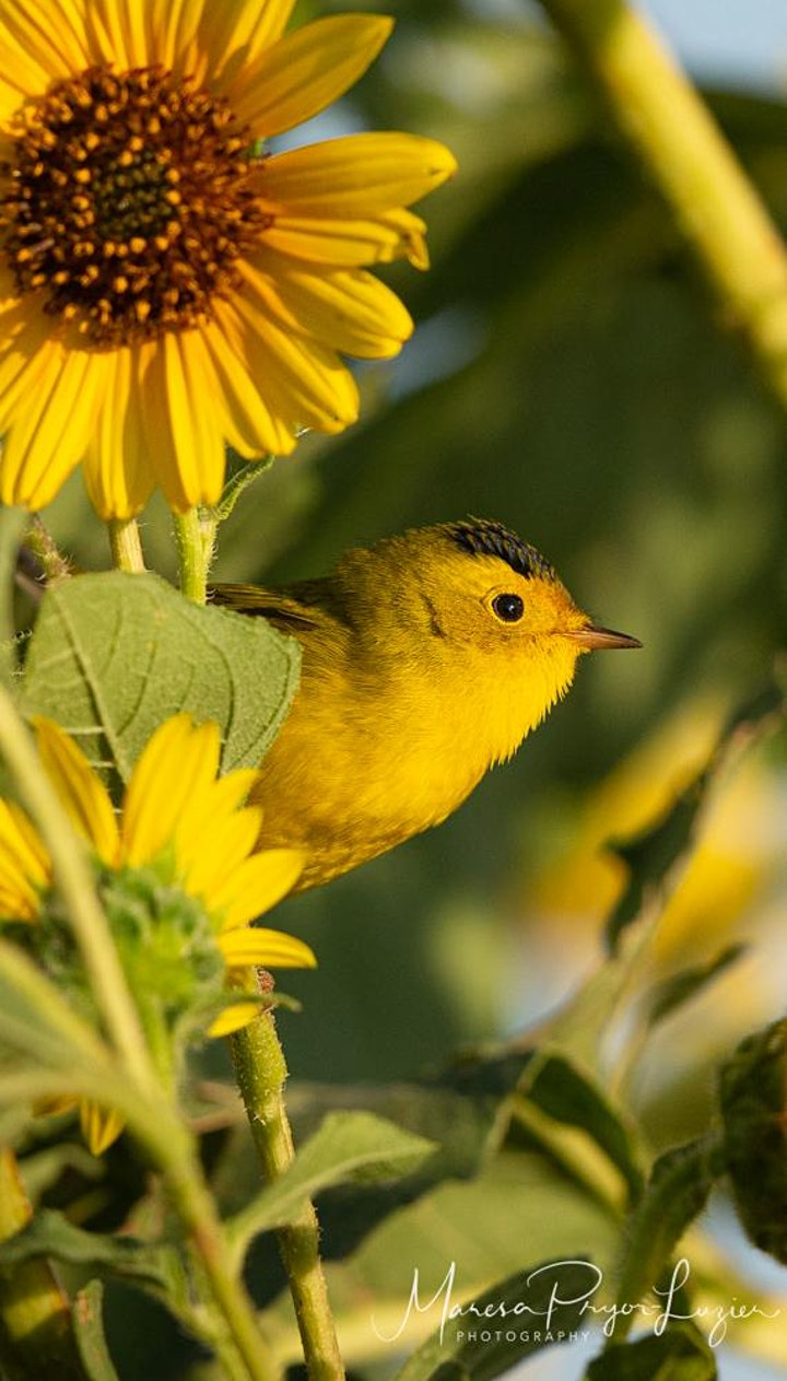 Bird Photography 101 image
