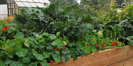 Embrace Gardening- Small Space Edible Gardening -Not Too Late to Start! tickets