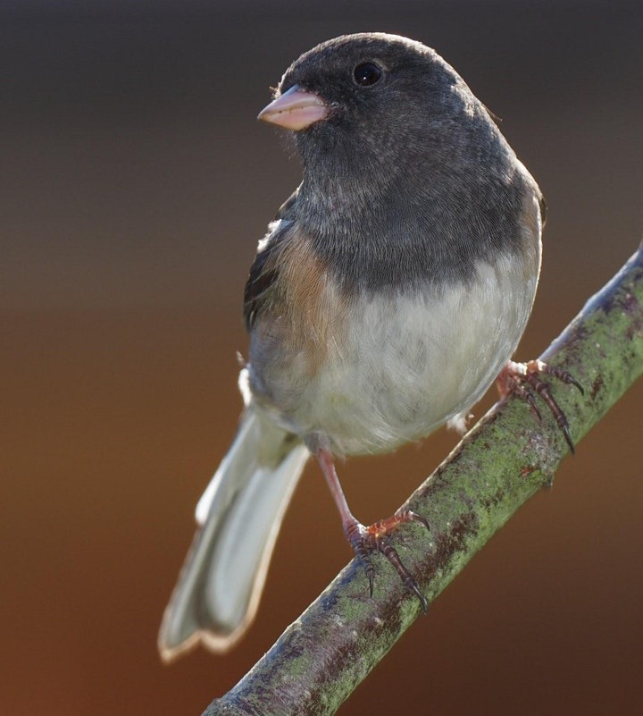 Better Backyard Birds image
