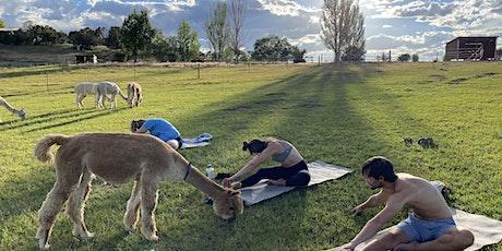 Alpaca Yoga tickets