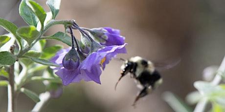 Naturalist Talks: Nurturing Nature in Neighborhoods tickets