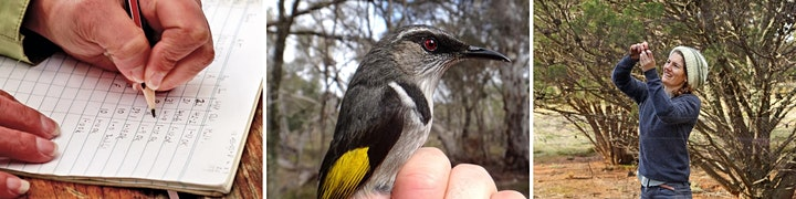 Bird Banding on Kangaroo Island image