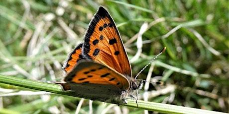 Gardening for Butterflies tickets