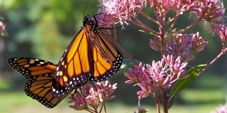 Hand-Raising Monarchs with Monarch Kit - Virtual Workshop tickets