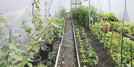 Edibles and ornamentals to sow in the autumn tickets