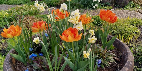 Creating spring colour with bulbs tickets