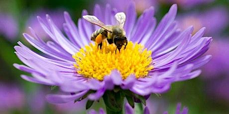 Meet Madison's Beekeepers--and Pollinator Gardeners tickets