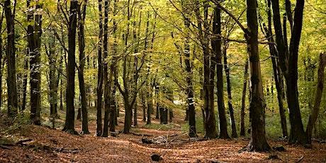 May 2021 Natural Mindfulness Walk Fforest Fawr tickets