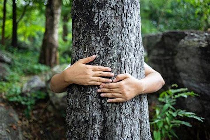 Image pour Bain de forêt au bois de Vincennes (SHINRIN-YOKU) - parcours initiatique