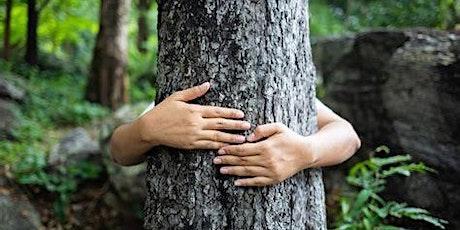 Bain de forêt au bois de Vincennes (SHINRIN-YOKU) - parcours initiatique billets