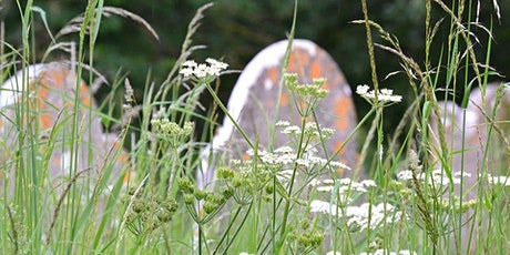 Identify & Record Wildflowers and Plants - Burrington tickets