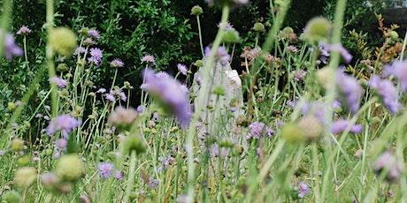 Identify & Record Wildflowers and Plants -Tarrington tickets