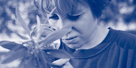 Summer Webinars - Teaching Primary Science Outdoors tickets