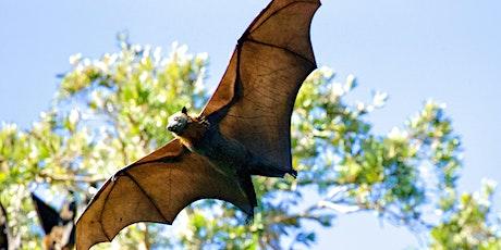 Whitehall Bat Walk tickets