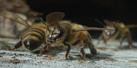 """Dr. Jamie Ellis, """"Toward sustainable beekeeping"""" tickets"""