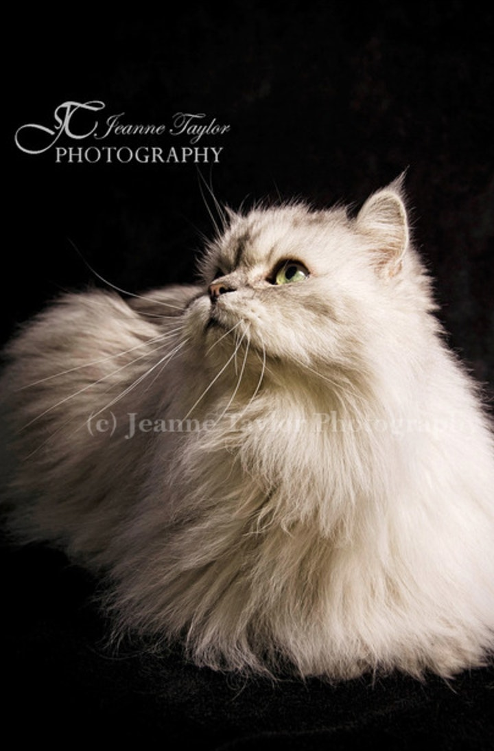 Pet Portraits image
