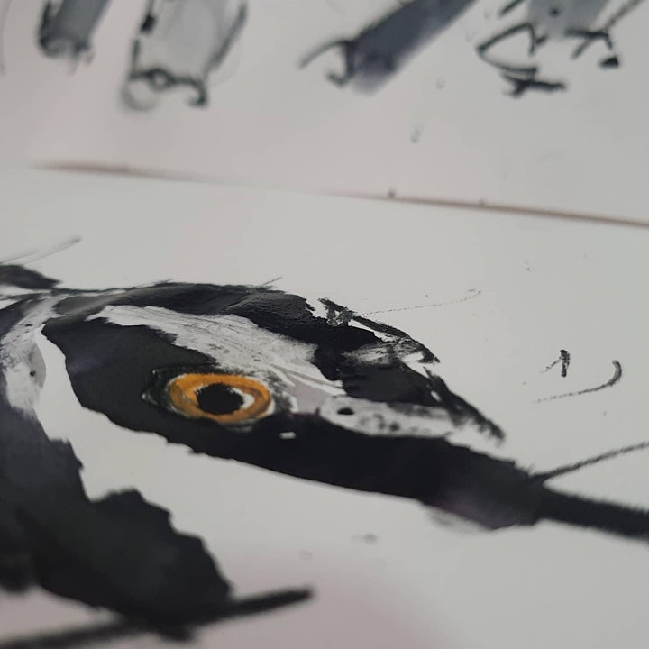 Nature Drawing Workshop image