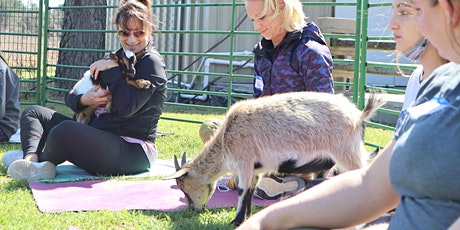 Goat Yoga Texas - Sun, June 6 @ 10am tickets