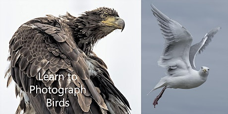 Bird Photos for Novice Photographers entradas