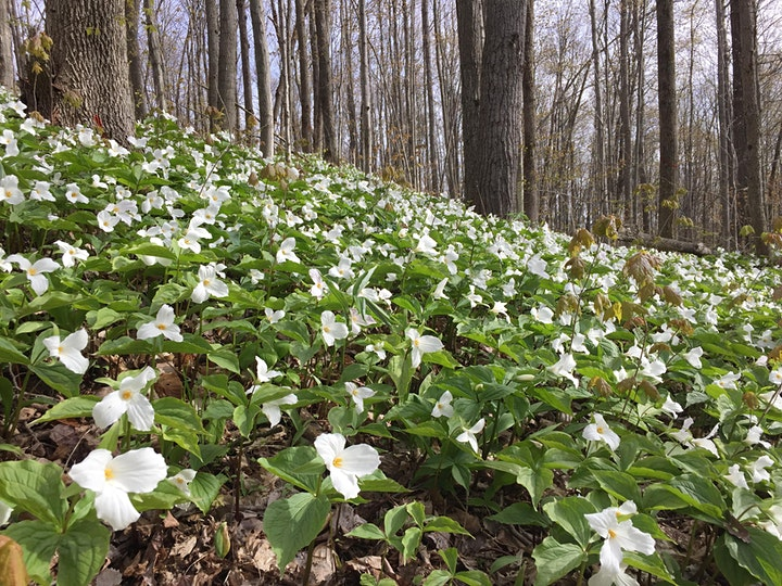 Spring into Forest Bathing! image